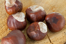 Conkers On A Tree Stump