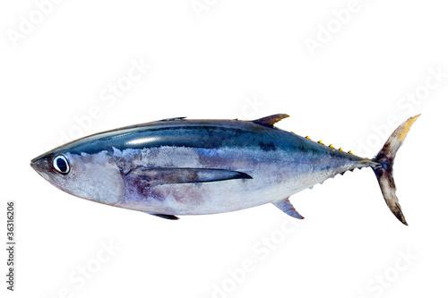 Albacore tuna Thunnus alalunga fish isolated Wallpaper Mural