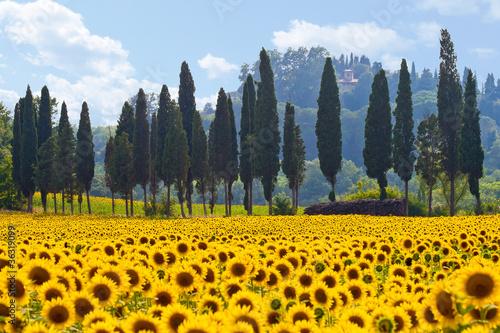 In de dag Toscane Sonnenblumenfeld in der Toskana quer