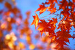canvas print picture - Herbstlaub3