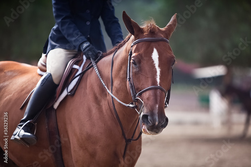Fotografie, Obraz  Riding High