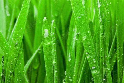 Naklejki rośliny   mokra-trawa-makro