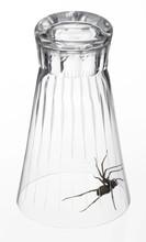 Spider Under A Drinking Glass