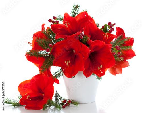 Photo Christmas arrangement of amaryllis