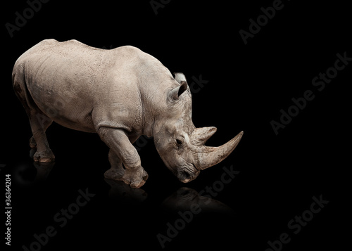 rhinoceros Canvas-taulu