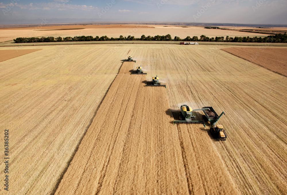 Fototapety, obrazy: Aerial View of Harvest