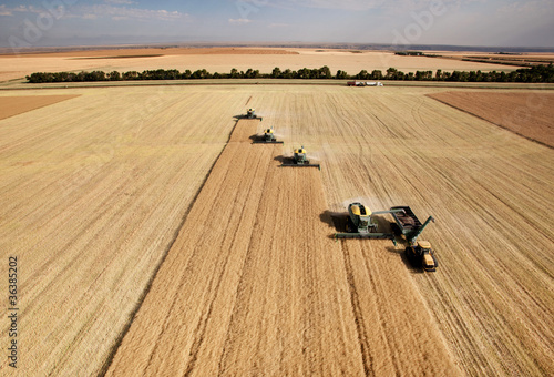 Fotografie, Obraz  Aerial View of Harvest