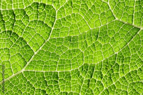 In de dag Macrofotografie Macro of green leaf