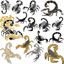 Scorpions Vector Collection