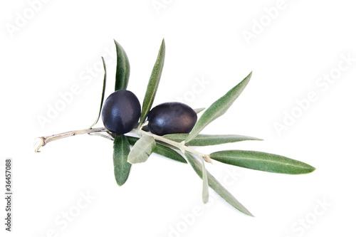 Photo aceitunas negras en la rama