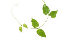 Ivy Circle Becomes The Circle