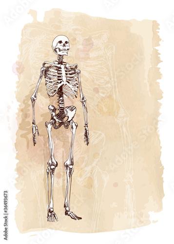Printed kitchen splashbacks Watercolor skull Skeleton sketch & watercolor vintage background
