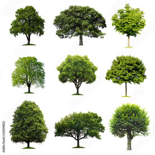 Láminas  Trees Collection