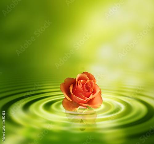 Doppelrollo mit Motiv - Rose und wasser