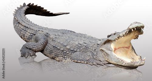 Poster Crocodile Asia crocodile acting