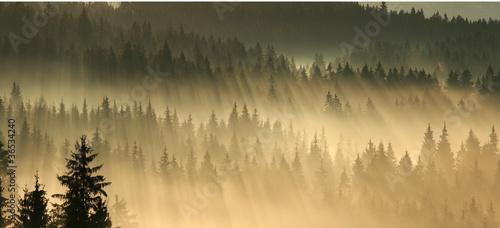 Poster Morning with fog Morgennebel über dem Wald