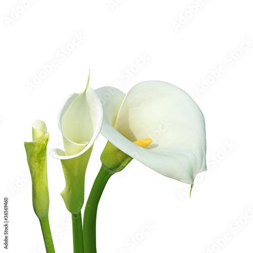 aron-blanc