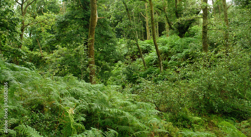 Foto op Aluminium Groene forest at the West Highland Way