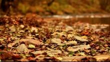 Autumn Brooke Background