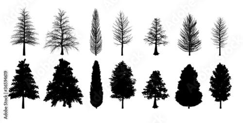 Foto  Silhouette trees
