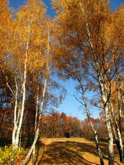 Fototapeta colorful autumn forest