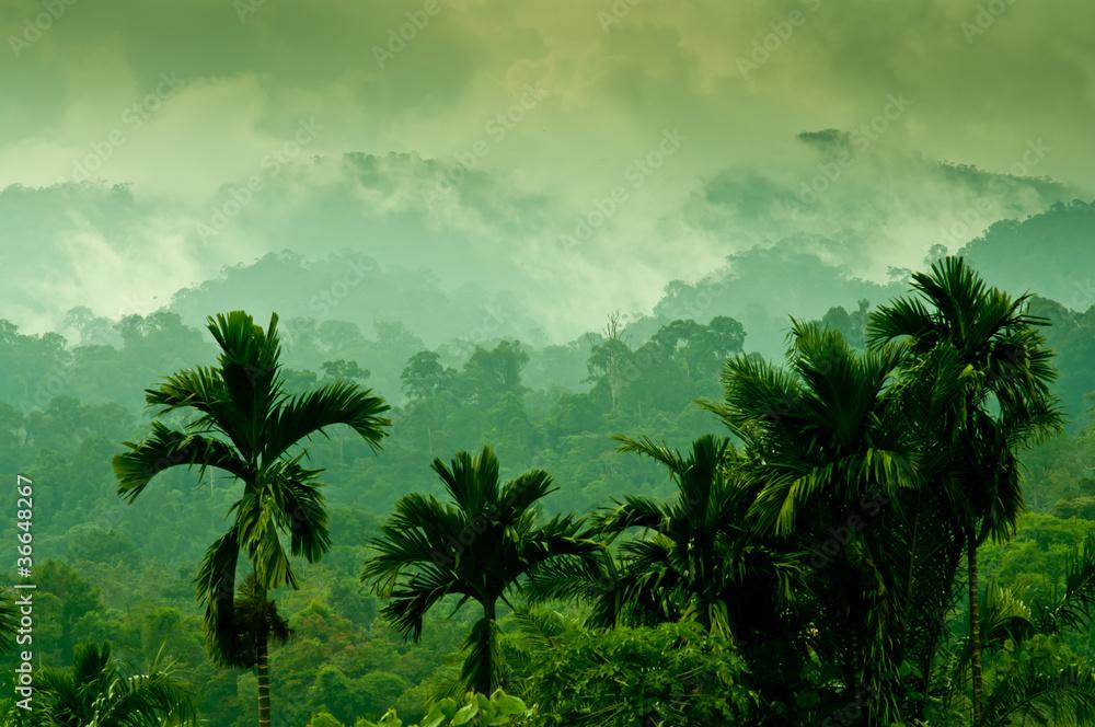 Fototapety, obrazy: Selva de Sumatra