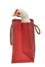 Little Chicken Sitting Inside The Shopping Bag