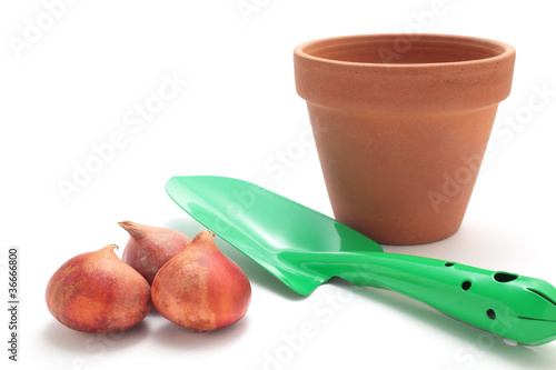 Tulip bulbs, flowerpot and shovel Plakát