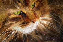 Tabby Cat Close-up. Simulation...