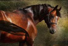 The Thoroughbred Classical Oil Portrait
