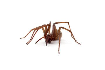 Nahaufnahme einer Spinne (freigestellt)