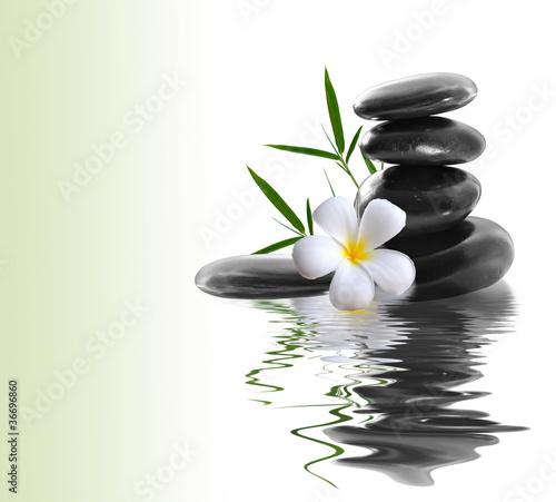 Plissee mit Motiv - frangipani and stones on a white background