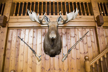 Moose Head And Guns On Wall