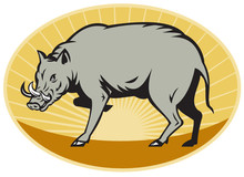 Babirusa Wild Pig