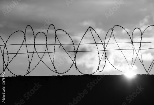 Fotografie, Obraz  barbed wire
