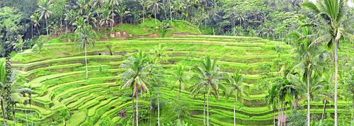 Photo sur Toile Les champs de riz panorama of Tegalalang rice field terraces, Bali, Indonesia
