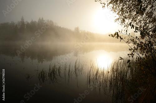 Plakaty rośliny   poranna-mgla-nad-jeziorem