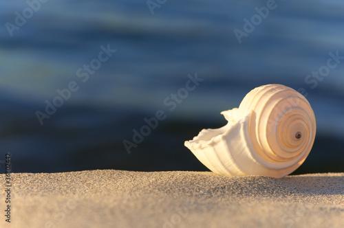 Motiv-Rollo Basic - Sommerabend am Meer, Strandgut, Tonna Allium