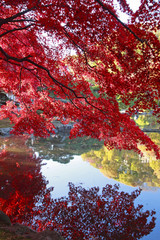 Fototapeta盛岡西部公民館の紅葉