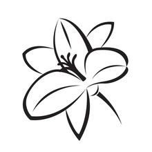 Monochrome Illustration Of Lily