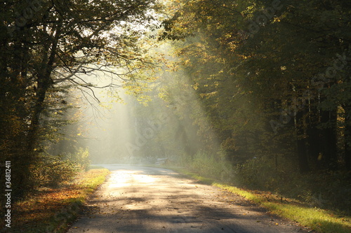 Papiers peints Foret brouillard Lane running through the autumn deciduous forest at dawn