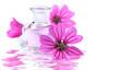 Spa Scene mit Malven (Malva sylvestris) - Bachblüten