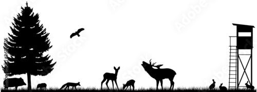lesne-lakowe-pole-wysokie-miejsce-sylwetka