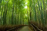 Fototapeta Bamboo - Bamboo grove