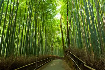 Panel SzklanyBamboo grove