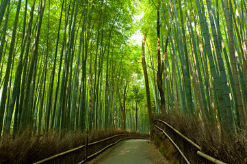 Obraz Bamboo grove