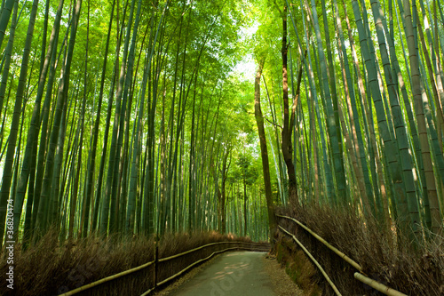 Photo Stands Bamboo Bamboo grove