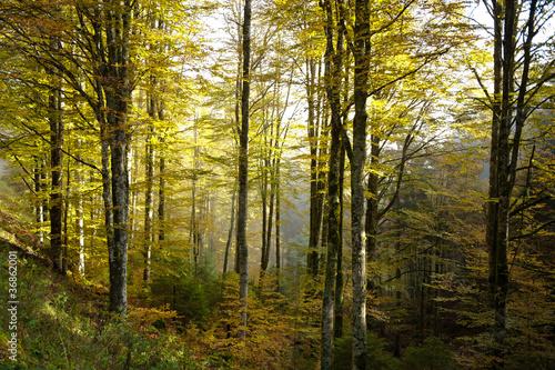 bosco del cansiglio 421 © peggy
