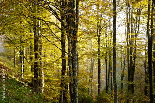 bosco del cansiglio 422 © peggy