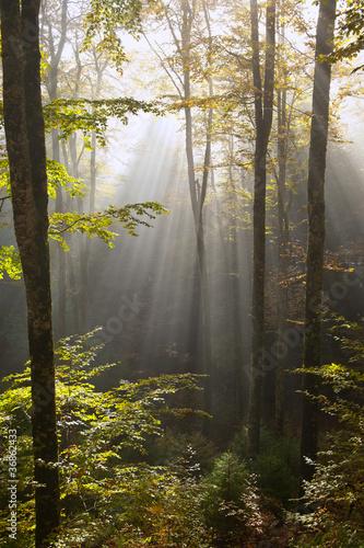 bosco del cansiglio 424 © peggy